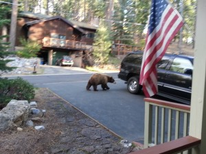 Bear at our home - Once A Mom Always A Mom - Erin Howard
