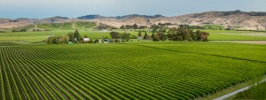 Brancott Estate Wine - FlightSong - nceAMomAlwaysAMom.com